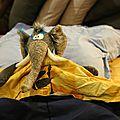 Un éléphant dans un lit