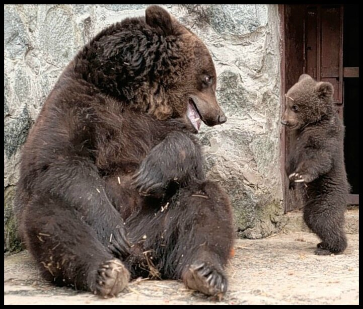 bebe ours & maman ours 3