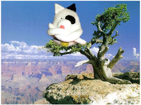 chat_boudeur_dans_paysage_l