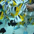poissons (4)