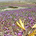 Chili : le désert d'atacama