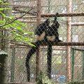 2010-11-18 parc Cuc Phuong (4)