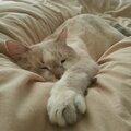 au lit_knutsch