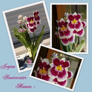Orchid_e_Maman