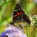 Butterfly (42)