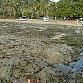150_Lombok_etoiledemer_plage