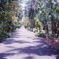 jardin Pamplemousse_12
