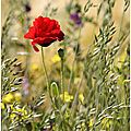 Composition florale...