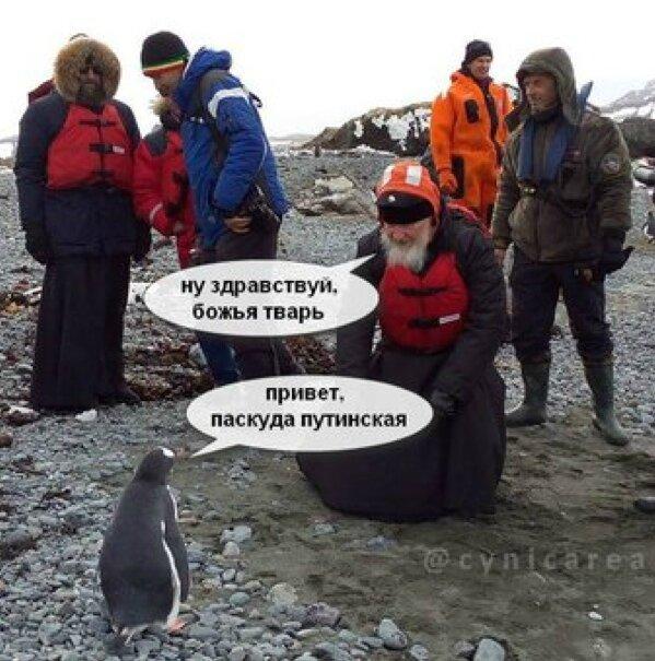 kiril pingouins