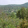 0986-Pichauris