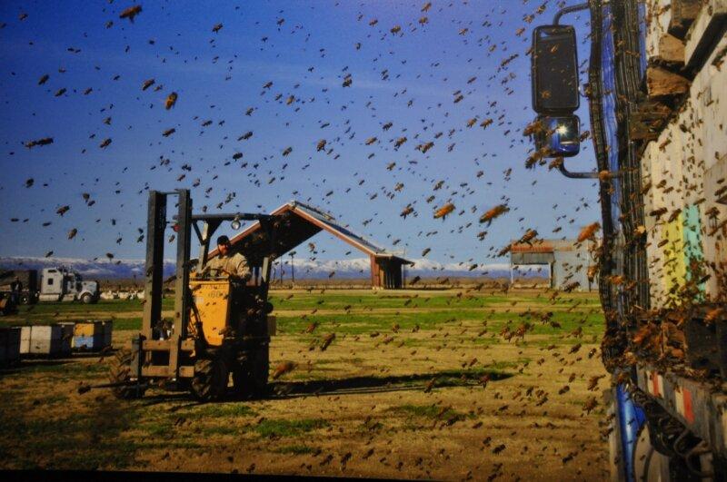 cueilleurs de miel 0530052