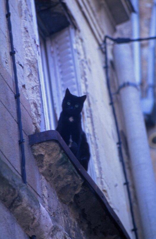 D 93 11 14 Chat dans la Grande rue à Sablé