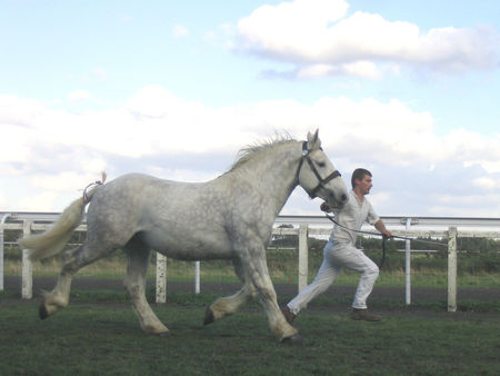 _26__Perouse2_trot