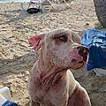 Chien abandonné sur une plage 24 Nov 2016