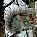 Avatar écureuil sur une branche