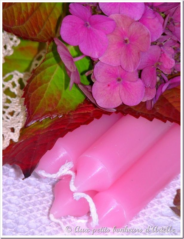 Hortensias aux couleurs de l'automne (20)