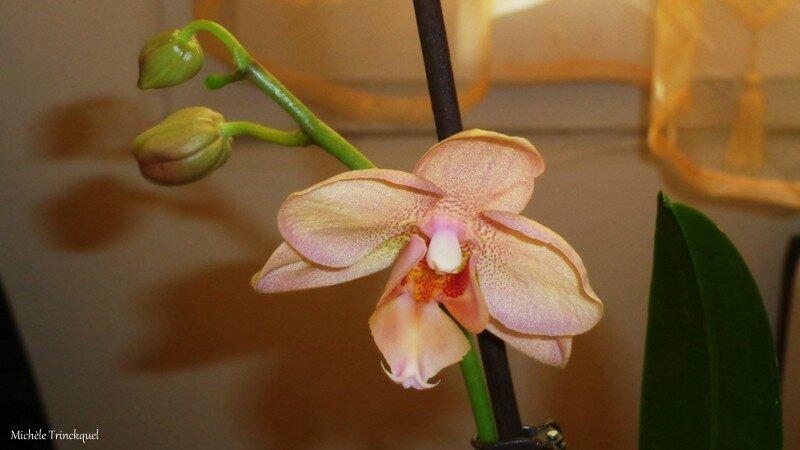 Orchidée rose 210216