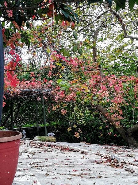 crete automne 18