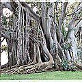 tronc-arbre