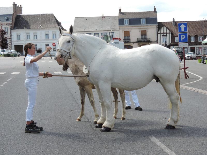 Quinette du Marais - 2 Juin 2019 - Concours d'élevage local - Fruges (62) - 4e (Poulinières Suitées)