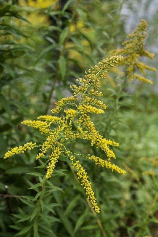 fleurs sauvages - 1
