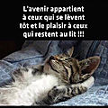 chat avenir plaisir