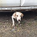 Cassis Cookie 3 chienness sous carcasse de voiture Elfique le 3ème 1 sur cette photo
