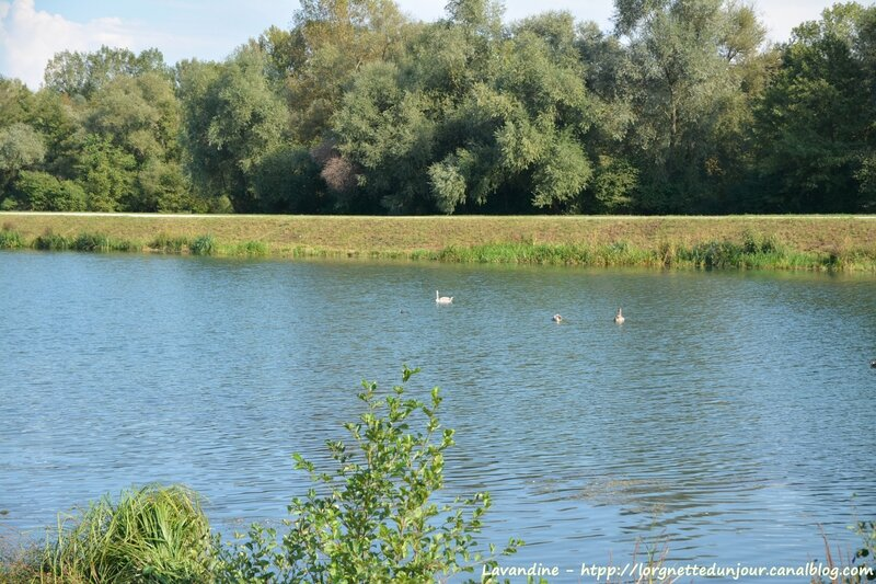 09 16 canal de decharge krafft (2)