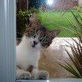 Dure... la vie de chat #2