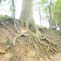 des racines courent sur les talus
