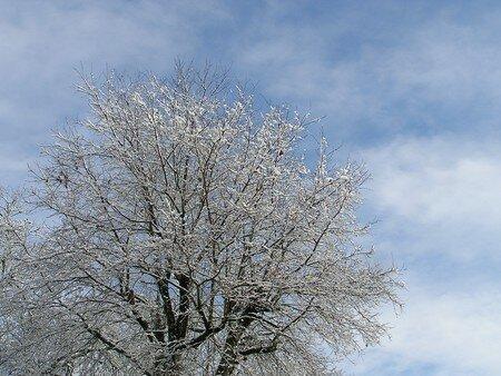 neige_25_01_2007_035