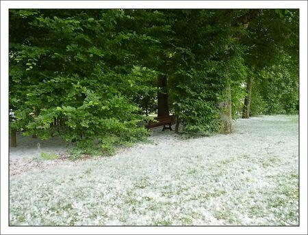 neige_arbres_010511