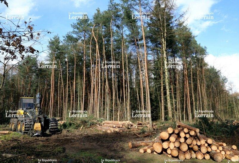 aujourd-hui-le-president-du-sydeme-promet-qu-il-n-y-aura-pas-40-hectares-de-miscanthus-au-guensbach-il-dit-aussi-ne-pas-savoir-sur-qu