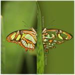 20190508 papillons01 B