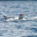 21 oct 09 - baleines (35)