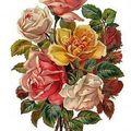 Fleurs vintage - notre malle