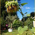 Soleil...pluie...vive le jardin !!!!