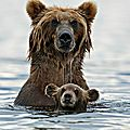 Câlin d'ours avec rose, 20e inscrite