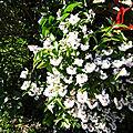 Fleurs de Léon 220518