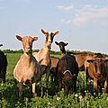 On nous prendrait pas un peu pour des chèvres ?!