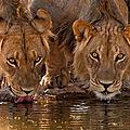 lion projet pour la france