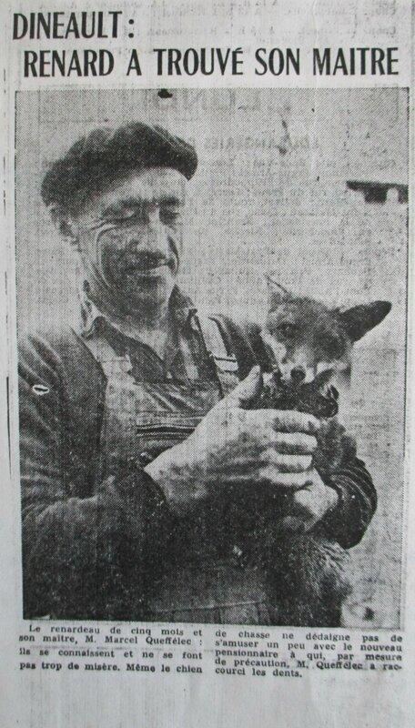 1967 Marcel avec un renardeau
