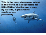 SHARKS 3