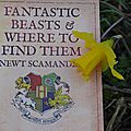 [avis n°2] fantastic beasts & where to find them de j.k. rowling