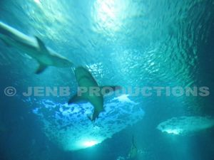 2012 10 30 Aquarium de Paris © JENB Productions