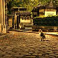 chat-pere-lachaise-paris
