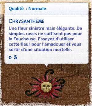 chrysanthème 2