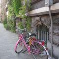 Vélo et glycine