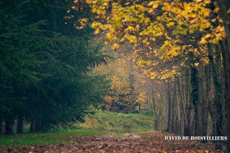Draveil en automne