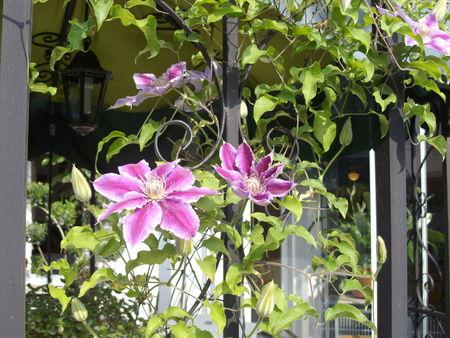 mon_jardin_001
